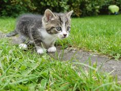 Cats may be adorable, but theyre also killers: a new study suggests that kitties are responsible for billions of bird and small mammal deaths a year.