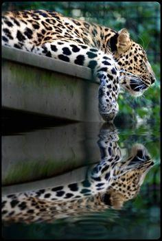 mistymorrning:    reflecting….