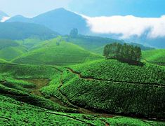 Trip To India From Us | Munnar | Tours to Munnar | City Trip | Kerala Destionations.