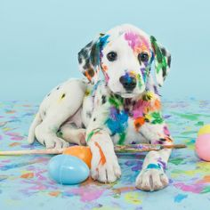 It is so cute. Dalmatian with coloured spots.