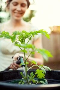 Watering plants regularly is very important for successful gardening- need 1 inch per week plus 1/2 inch per extra 10 degrees over 60!!!