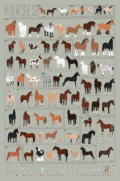 //cdn.shopify.com/s/files/1/0211/4926/products/P3-Horses_ImgA_1024x1024.jpg?v=1505841548
