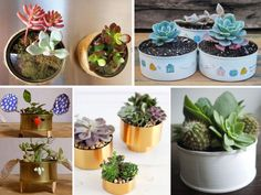 manualidades con latas de atún Tin Can Crafts, Diy And Crafts, Recycle Cans, Plastic Bottle Crafts, Succulent Arrangements, Recycled Crafts, Flower Pots, Farmhouse Bedroom Decor, Decoupage