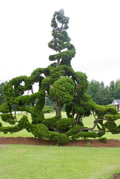 In Pearl Fryar's Topiary Garden by erinmatthes, via Flickr