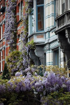Wisteria in the étangs d'Ixelles district by flickr user Simon Blackley