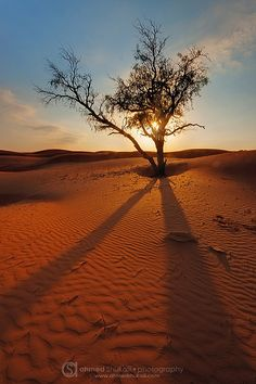 See, I am doing a new thing! Now it springs up; do you not perceive it? I am making a way in the desert and streams in the wasteland. Isaiah 43 : 19