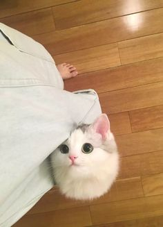 my pocket cat.... #Cute