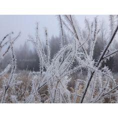 Люблю зиму за белые пейзажи, которые вдохновляют меня на творчество   #зима #снег #winter #snow #inspiration #a_saeva