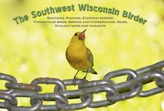 A very interesting Wisconsin birding blog with great pics!