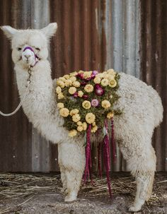 floral baby alpaca wedding