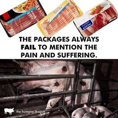#vegan reality check
