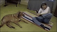 Dog is better in yoga
