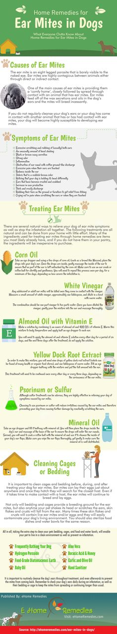 http://ehomeremedies.com/ear-mites-in-dogs/ If you are looking for low cost, natural yet highly effective home remedies for ear mites in dogs, they are here to help. Here is an interesting infographic I have found at ehomeremedies.com