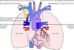 Adult congenital heart library nevil thomas