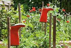 Garden - Share and let the children look after their plot for the holidays!