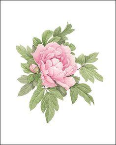 Dark Pink Peony Small Giclee Print by EllenBlonderStore on Etsy Art Floral, Peony Flower, Flower Art, Watercolor Flowers, Watercolor Paintings, Illustration Blume, Peonies Tattoo, Floral Illustrations, Pink Peonies