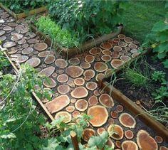 pad van schijven boomstam
