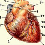 Hypertenzia? Váš krvný tlak budete mať 120/80, ak si pripravíte ...