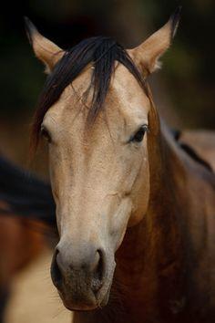 Kinjii  http://www.allaboutequine.org/our-horses/in-rehab/kinjii
