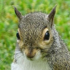 Headshot for squirrel's modeling agency