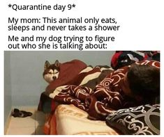 """Thirty-One Quarantined Memes For Extremely Bored Teens - Funny memes that """"GET IT"""" and want you to too. Get the latest funniest memes and keep up what is going on in the meme-o-sphere. Funny Shit, Stupid Funny Memes, Funny Relatable Memes, Haha Funny, Funny Posts, Funny Quotes, Funniest Memes, Funny Stuff, Laugh Quotes"""
