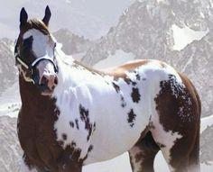 Most Beautiful Animals!