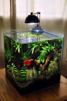 Afbeeldingsresultaat voor aquarium ideas for small tanks with cave