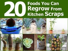 20 Foods You Can Regrow From Kitchen Scraps