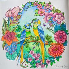 Johanna Basford Magical Jungle Faber Castell Polychromos