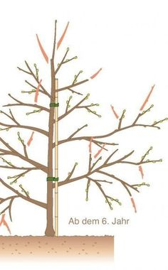 Pfirsichbaumschnitt | Garten | Pinterest | Garten Bodenverbesserung Garten Mittel Tipps