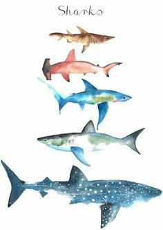 Sharks Art Print by ameecheriepiek - Drawing, painting, watercolor, sharks You are in the right place about Sharks Art Print by ameecheri - Hai Tattoos, Doodle Drawing, Shark Drawing, Shark Art, Ocean Art, Sea Creatures, Art Inspo, Watercolor Art, Cool Art