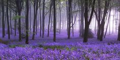lavender flowers on the forest floor