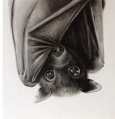 Super cute bat