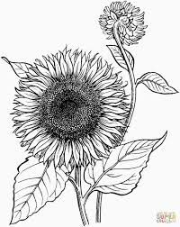 Coloring Pictures Of Lily Flowers Best Of Sunflower Coloring Sheet Blooming Sunflower Coloring Page Adult Coloring Pages, Sunflower Coloring Pages, Poppy Coloring Page, Coloring Pages To Print, Free Printable Coloring Pages, Coloring Sheets, Coloring Books, Blooming Sunflower, Sunflower Colors