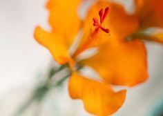 Tropical Orange Hibiscus Sugar Flower
