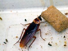 How to Identify and Eliminate Roach Droppings