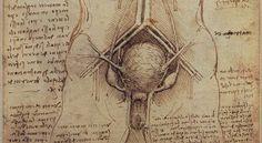 Urogenital system of a man, by Leonardo da Vinci