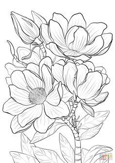 campbells magnolia super coloring - Free Colouring