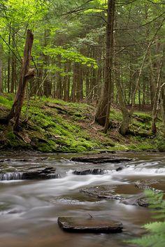 Catskills creek.
