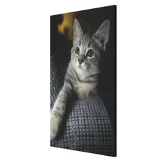 >>>best recommended          	Cat looking up 2 stretched canvas print           	Cat looking up 2 stretched canvas print lowest price for you. In addition you can compare price with another store and read helpful reviews. BuyHow to          	Cat looking up 2 stretched canvas print please follo...Cleck Hot Deals >>> http://www.zazzle.com/cat_looking_up_2_stretched_canvas_print-192609857125283279?rf=238627982471231924&zbar=1&tc=terrest
