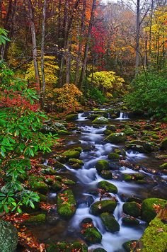 Roaring Fork River in Great Smoky Mountain National Park Gatlinburg, Tennessee USA