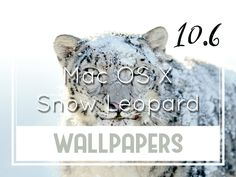 Mac Os, Snow Leopard, Background S, Desktop Wallpapers, Wallpaper S, Website, Wall Papers, Desktop Backgrounds, Wallpapers
