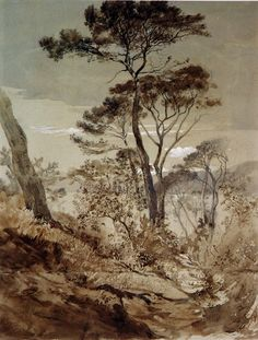 John Ruskin (Brit. 1819-1900), Stone Pines at Sestri, Gulf of Genoa, 1845, Graphite and pen and ink with washes and white bodycolor on off-white paper, 44.2 x 33.4 cm., Oxford, The Ashmolean Museum