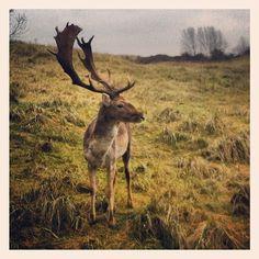@sandevoerde's photo:  deer