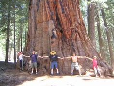 I would like to take my dad to Sequoia National Park in California because he really wants to go there & we went on a family vacation out west but we didn't get a chance to go there & seeing those trees would be life changing.