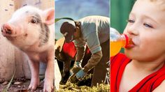 10 things that would fix the food system faster than GMO-labeling | Grist