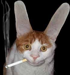 A smoking cabbit--Freaky Animals