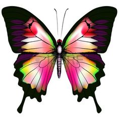 Butterfly Background Stock Photos And Images Butterfly Drawing, Butterfly Pictures, Butterfly Painting, Butterfly Watercolor, Butterfly Background, Butterfly Wallpaper, Art Papillon, Rainbow Painting, Photo Background Images