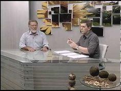 Produção de mudas de castanha-do-brasil para plantios comerciais