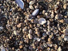 #shells #water #ocean #aesthetc #summer #summervibes #outside #nature #moss #pretty